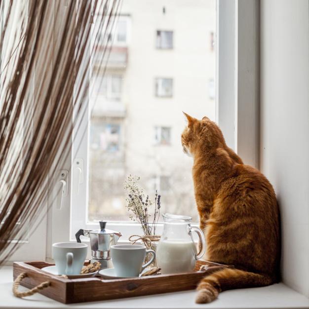 อาหารแมวเม็ด สำหรับแมว