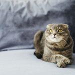อาหารแมวเม็ด จำเป็นกับแมวอย่างไร?