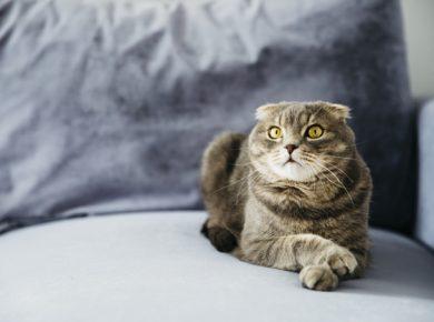 แมวนั่งรอ อาหารแมวเม็ด